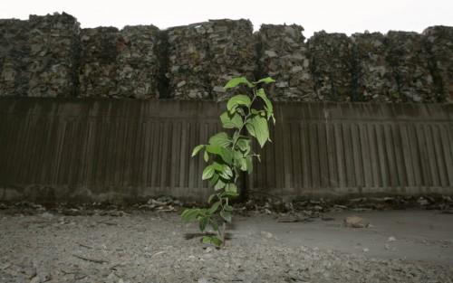 plante-ordure
