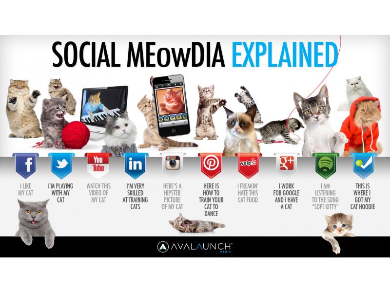 chats-reseaux-sociaux