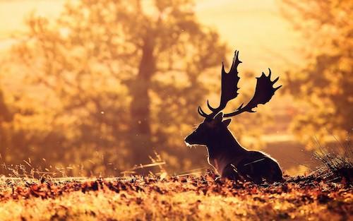 fond-ecran-animaux-4